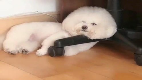 成天除了吃就是睡,天天等着我伺候它,我活的还不如狗啊!