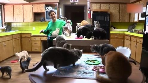老奶奶27年时间里,救助了三千多万的猫咪,花光了她所有积蓄