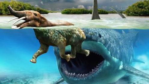 恐龙生存1亿多年就灭绝了,为什么鲨鱼能存在5亿多年,都没有消失?