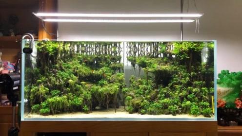 鱼缸造景不简单,大量使用杜鹃根,纯阴性水草,足有各为一个整体