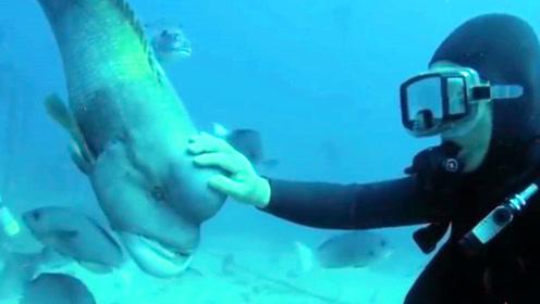 """大鱼和老人相识多年,老人80多岁竟然还潜水找鱼叙旧""""叙旧"""""""