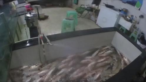 狠毒!嫉妒同行生意比自己好,四川一鱼贩倒汽油毒死200斤鱼