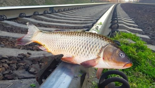 外国小伙无聊把鱼放在火车轨道上,火车呼啸驶过后,看到后果瑟瑟发抖