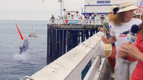 志愿者们正在放生海豹,进行到一半时,意外的事情发生了