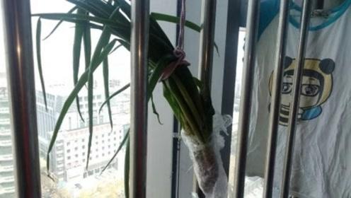 大葱放在窗户上,太厉害了,还有一些人不懂有啥用,真是学到了