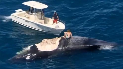 大海惊现鲸鱼尸体,国外男子跳上去拍照,镜头记录下恐怖的一幕!