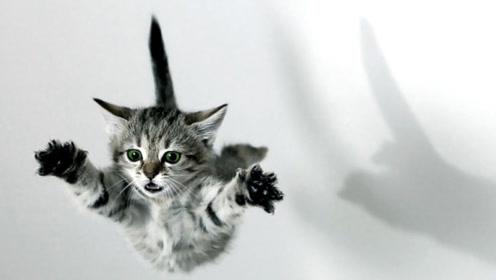 猫咪从高处掉落不会受伤,难道真有九条命?放慢20倍镜头看看