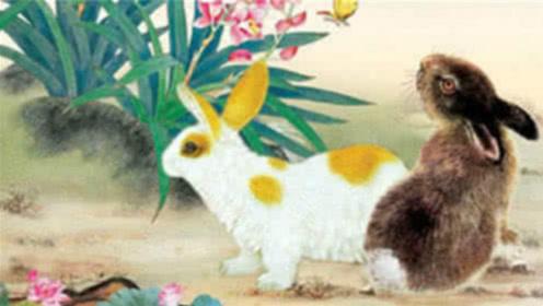 """周公说生肖:生肖兔命最好的""""出生时辰"""",晚年也能日进斗金"""
