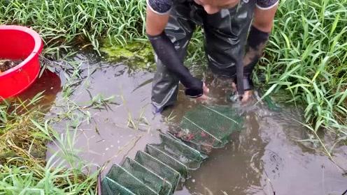 一中午能抓接近30斤小龙虾,这样的速度岂不是要发财?一天赚几百