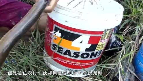 农村小伙用曼妥思加可乐捉泥鳅,一瓶下去以后,泥鳅全都出来了
