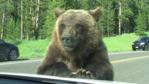 两男子丛林骑行,偶遇棕熊出来捕食,瞬间变成生死时速!