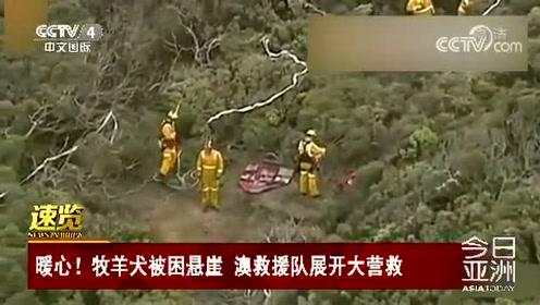 暖心!牧羊犬被困悬崖 澳救援队展开大营救