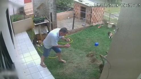 硬核!巴西男子消灭自家蟑螂窝 点火扔进洞后围观狗狗的反应亮了