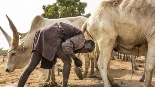 非洲最奇葩部落,每天醒来都会用牛尿洗头!看完刷新认知