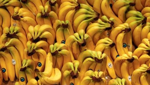 2050年香蕉或将消失?第二次香蕉灭绝,背后原因是什么?