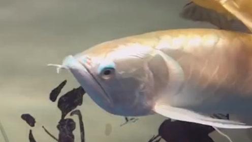 早就看见这条鱼不爽了,趁着老公不在家,开炖!