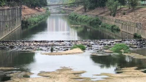 广州旺旺食品涉偷排废水被查 造成河流重大污染大量鱼类死亡