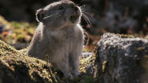 消失了24年的物种再次出现,专家却称不一定是好事,怎么回事?