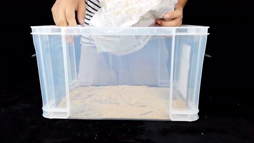 二货开箱一个小盒子,里面有四张报纸,说3天后会孵化38000只小虫子