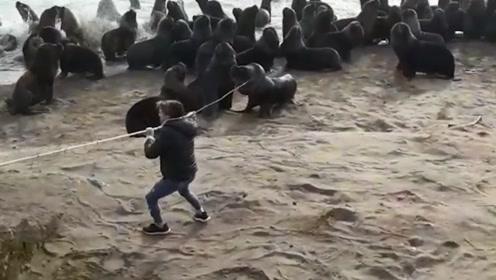 海狮遭轮胎卡脖呼吸困难 志愿者神助攻 助其脱困