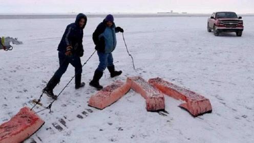 雅库特人生活在零下50度的地方,平时只吃生肉,难道不会得病吗?