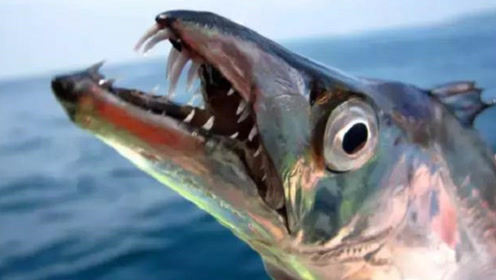"""最有""""骨气""""的鱼,被打捞后立马自爆,没有人可以把它活着带回去"""