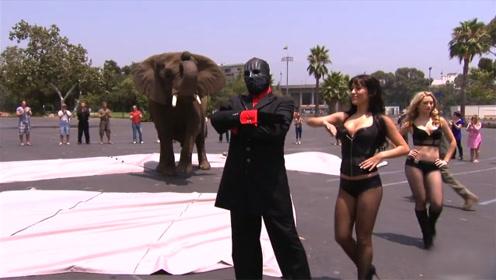 魔术师街头魔术,凭空变出一头大象,众人一脸茫然!