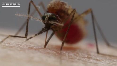 终于知道为什么经常被蚊子咬了,竟还和穿什么衣服有关系,涨知识了!