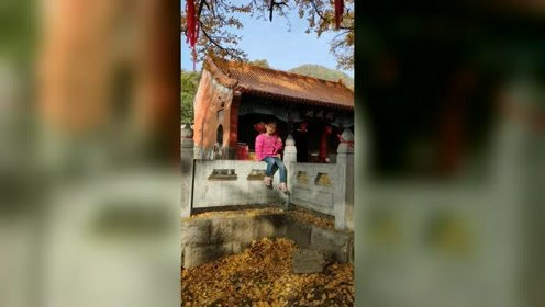 河南平顶山:这个古寺一到秋季美翻了!只因5棵千年银杏树