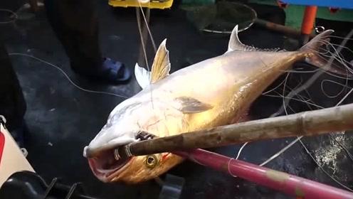这个鱼线结实,两个人一起拉都不断,水里的大鱼可惨了