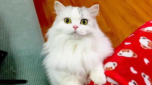 铲屎官三天不在家,一到家血压直线上升,猫咪也一脸茫然:你谁啊