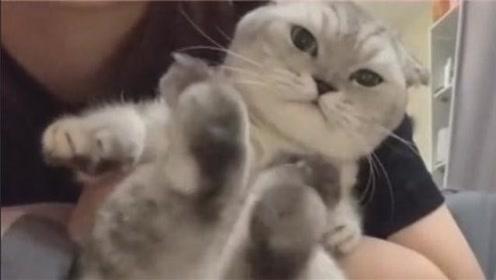 猫咪被一脚踢下了床,这下哄不好了!