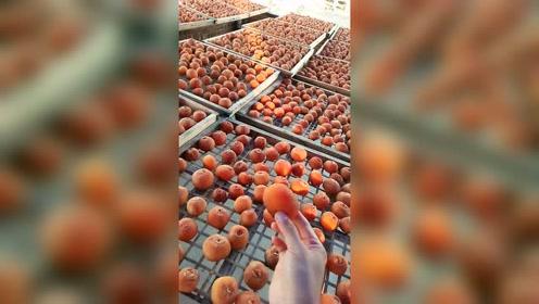 只晒了9天的柿子是什么味道?