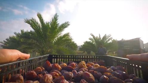 """迪拜土豪必备食物,被称为""""沙漠面包"""",网友:在中国太普遍"""