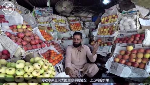 巴基斯坦上万吨水果滞销,中国用实际行动诠释什么叫铁哥们