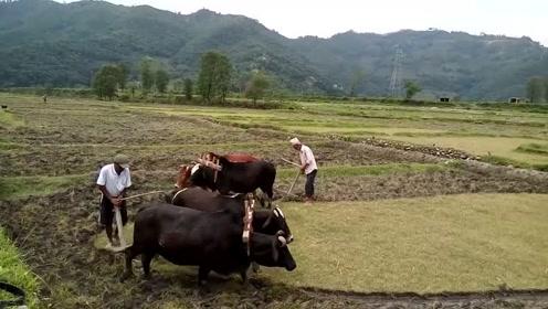 尼泊尔农民,唱着歌儿耕着地,日子好快活自在!