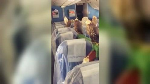 土豪带几十只燕隼坐飞机 网友:不懂有钱人的世界