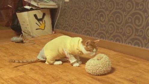 猫星人和刺猬第一次接触,遭遇气体炸弹,结局出乎意料