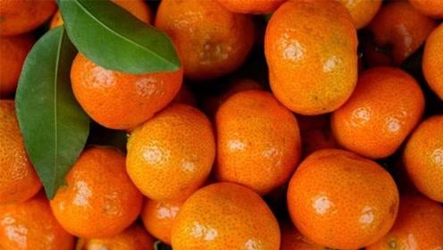 老果农告诫,这种橘子不要再买了!他们从来都不吃,早些叮嘱家人