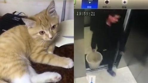 市民垃圾桶找到宠物猫尸体 疑似遭邻居毒打致死