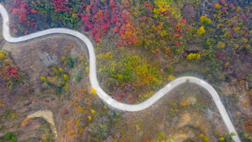 无人机航拍章丘垛庄美景,蜿蜒曲折的盘山公路穿行在五彩山林中