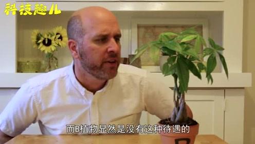 植物也有耳朵?男子对着两棵树说话,30天后变化太神奇了!
