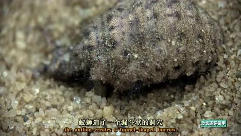 这个杀手有点儿冷!看沙地冥界之子蚁狮如何大杀四方!