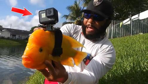 还是老外会玩,将摄像机绑在鱼儿身上,鱼儿下水以后会看到什么?