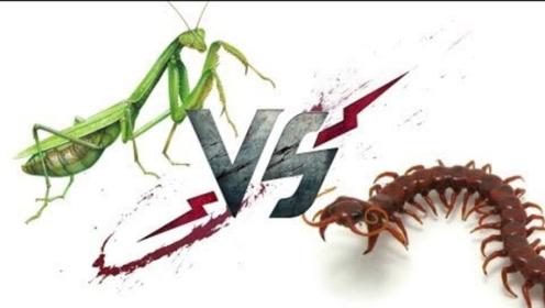 当螳螂遇上蜈蚣,本以为会有一场硬仗,蜈蚣:哼,徒有其表