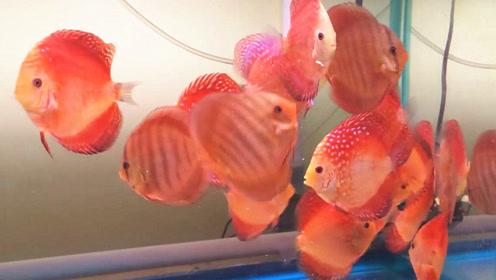 精心喂养的一大群宝贝宠物鱼,站在旁边静静观看,那也是一种享受