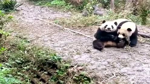 难怪受世界人民喜爱,大熊猫完全长在萌点上,太可爱了!