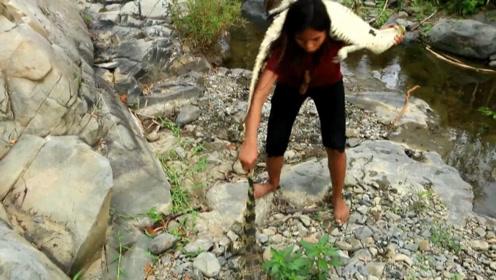 越南美女用手抓鳄鱼,拖上岸后直接带走,鳄鱼看见她都害怕