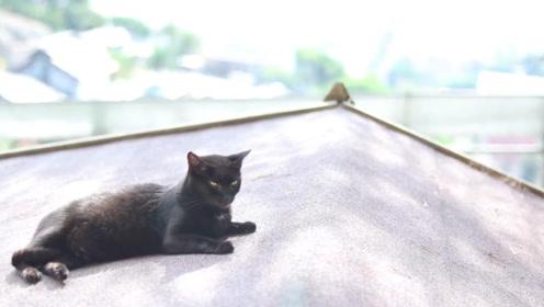 为啥猫咪总喜欢离家出走?走后也不愿意再回来,网友:记不住路?