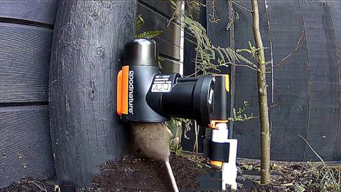 国外发明的高科技灭鼠神器,不流一滴血,让老鼠瞬间死亡!